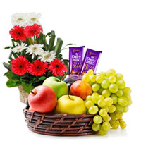 Delectable Gift of Dairy Milk Silk with Refreshing Mixed Fruits Basket and Gerberas Arrangement
