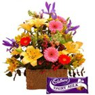 Mixed Color Flowers with Cadbury Dairy Milk Chocolate
