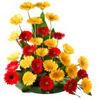 Eye-Catching 30 Mixed Colorful Gerbera Arrangement with Style