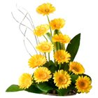 Aromatic One Dozen Gerberas Bouquet