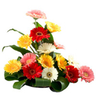 Aromatic 15 Mixed Gerberas in a Beautiful Arrangement