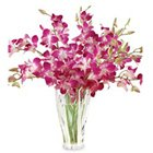 Lovely Orchids Arranged in a Glass Vase