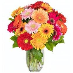 Delicate Fresh Mixed 15 Gerberas Arrangement with Vase