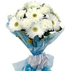 Tender White Gerberas Bunch with Fillers