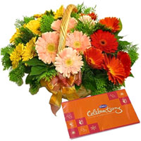 Captivating Gift of Mixed Gerberas Basket with Cadbury Celebration Pack